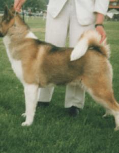 female american akita also dog wikipedia rh enpedia