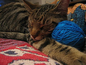 House cat with a ball of yarn.