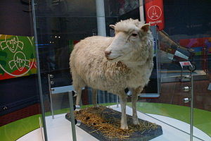 English: Dolly the sheep, National Museums of ...