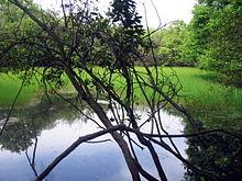 Aree naturali protette del Lazio  Wikipedia