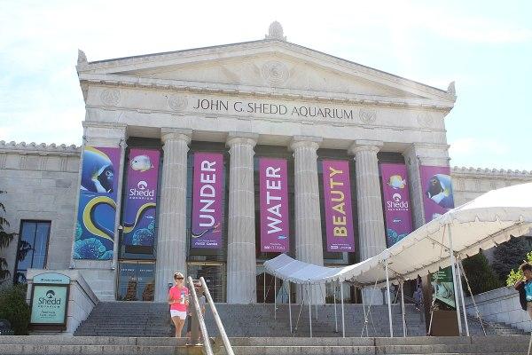 Shedd Aquarium - Wikipedia