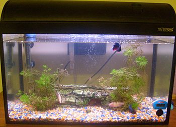 A shot of our 10 Gallon tank. Hopefully being ...