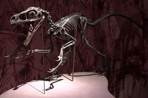 File:Dans l'ombre des dinosaures - Bambiraptor jeune - 04.jpg