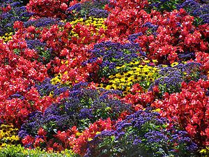 English: A flower bed displaying a variety of ...
