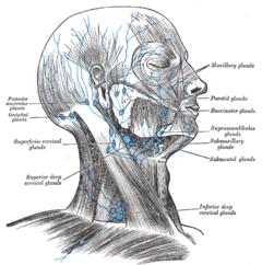 facial lymph nodes diagram wiring light switch węzeł virchowa – wikipedia, wolna encyklopedia