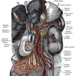 Vagus Nerve Diagram Dual Voice Coil 6x9 Superior Mesenteric Plexus - Wikipedia