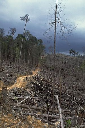 English: Deforestation and forest burning for ...