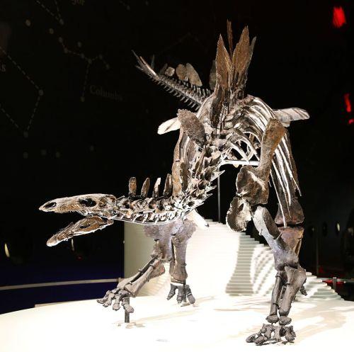 https://i0.wp.com/upload.wikimedia.org/wikipedia/commons/thumb/6/64/Stegosaurus_%28Natural_History_Museum%2C_London%29.jpg/1024px-Stegosaurus_%28Natural_History_Museum%2C_London%29.jpg?resize=500%2C497&ssl=1