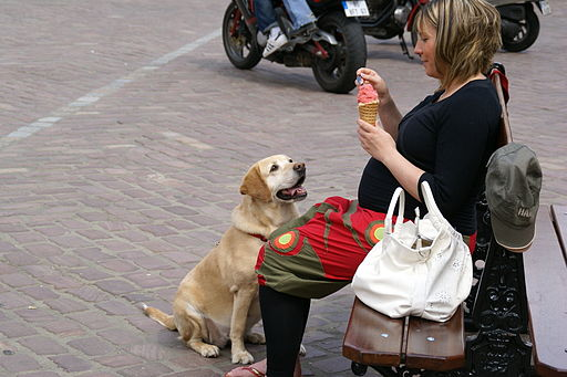 2010.05.29.151251 Perro Place du Marché Obernai FR How To Stop Your Dog Begging For Food