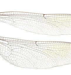 diagram of housefly [ 1280 x 720 Pixel ]