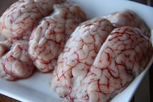 Brain As Food  Wikipedia