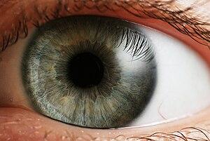 العربية: العين البشرية Česky: Lidské oko. Deut...