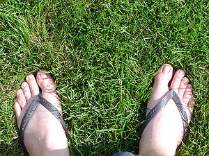 Flip-flops are secured to the foot by a strap ...