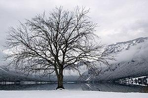 English: Tranquility by the Lake Bohinj
