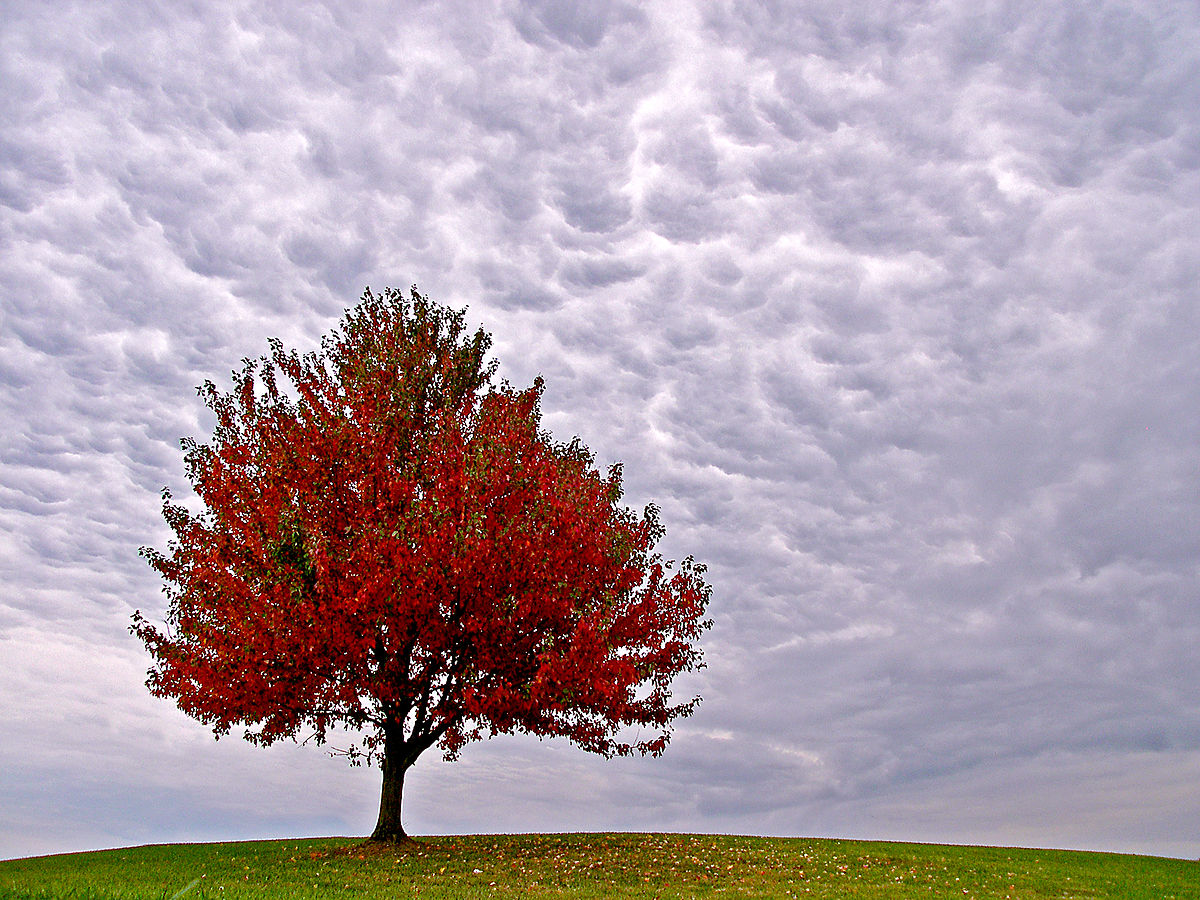 Fall Trees Wallpaper For Desktop Masterson Station Lexington Wikipedia
