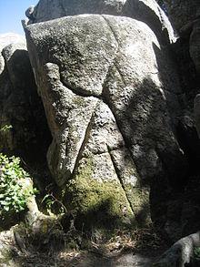 Nardodipace  Wikipedia