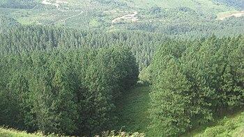 Hutan musim  Wikipedia bahasa Indonesia ensiklopedia bebas