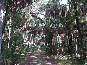 English: Highlands Hammock State Park, Highlan...