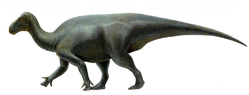 File:Life restoration of Iguanacolossus.jpg
