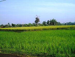Irigasi  Wikipedia bahasa Indonesia ensiklopedia bebas