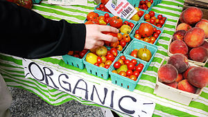 English: A hand reaching for organic tomatoes ...