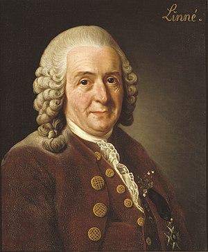 Carl von Linné, Alexander Roslin, 1775. Oil pa...