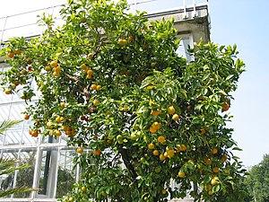 Meise (Belgium), National Garden of Belgium - ...