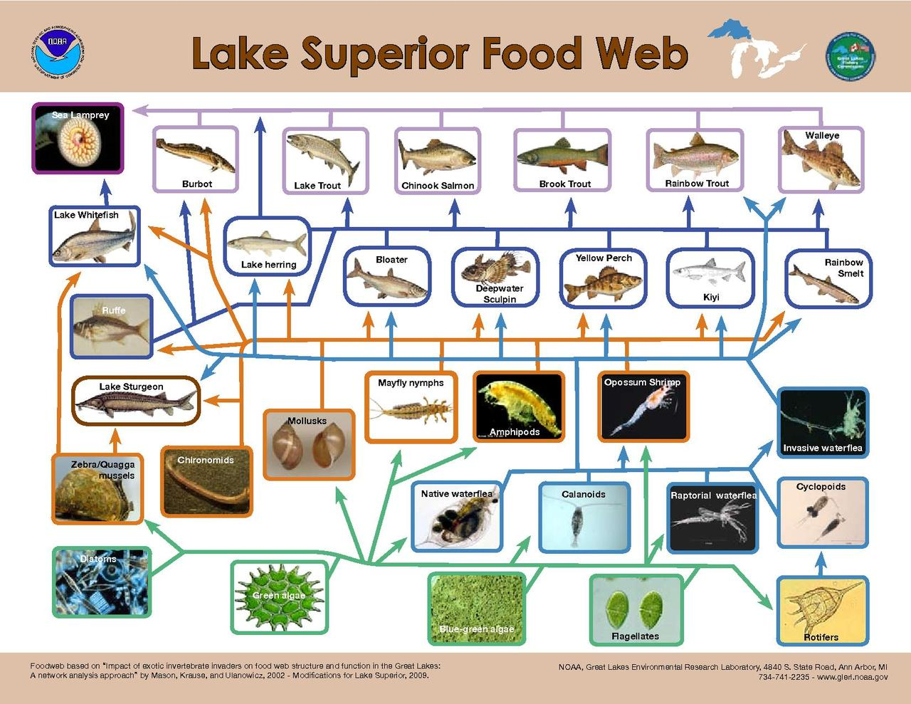 freshwater biomes food chain diagram whole home dvr wiring file lake superior web pdf wikimedia commons