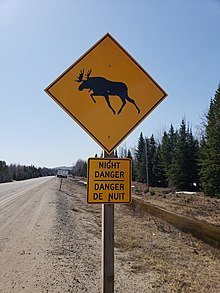 How Big Are Moose Compared To Humans : moose, compared, humans, Moose, Wikipedia