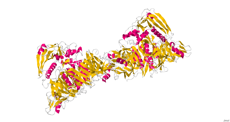 Crystal structure of pertussis toxin