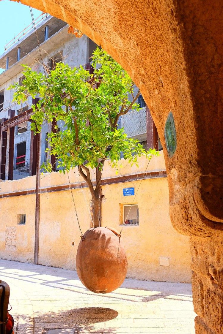 Hanging Orange Tree, Jaffa (20255113630)