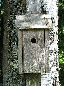 Caja nido  Wikipedia la enciclopedia libre