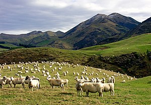 Whitecliffs, Canterbury, New Zealand