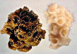 Unbleached and bleached coral.