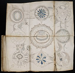 A Fold-Out Page of the Voynich Manuscript