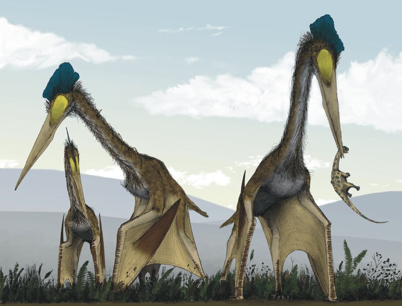 File:Life restoration of a group of giant azhdarchids, Quetzalcoatlus northropi, foraging on a Cretaceous fern prairie.png