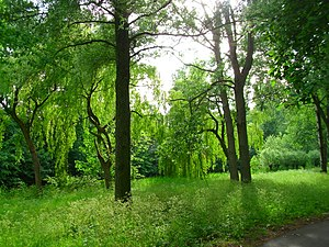 Willow trees in a Zoetermeer city forest