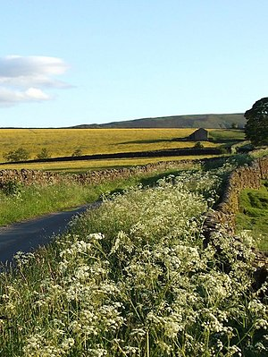 English: Country lane, summer evening Stone wa...