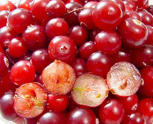 Vaccinium oxycoccus (Cranberries)
