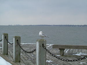 English: Mascot_in_winter. Patchogue Dock phot...