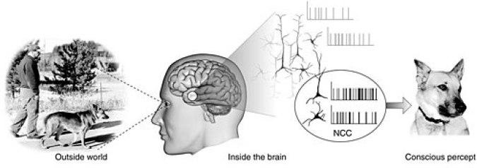 「脳のRAS」の画像検索結果