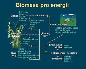 Česky: Zdroje biomasy