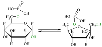 Reaction-Glucose-6P-Fructose-6P oc.png