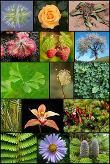 Plant Kingdom   Plantae Kingdom Classification and Characteristics