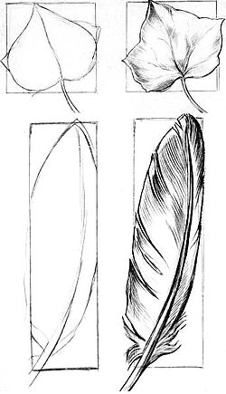 beginners drawings drawing sketches draw beginner sketch pencil simple feather chapter library fun learn ivy fig leaf