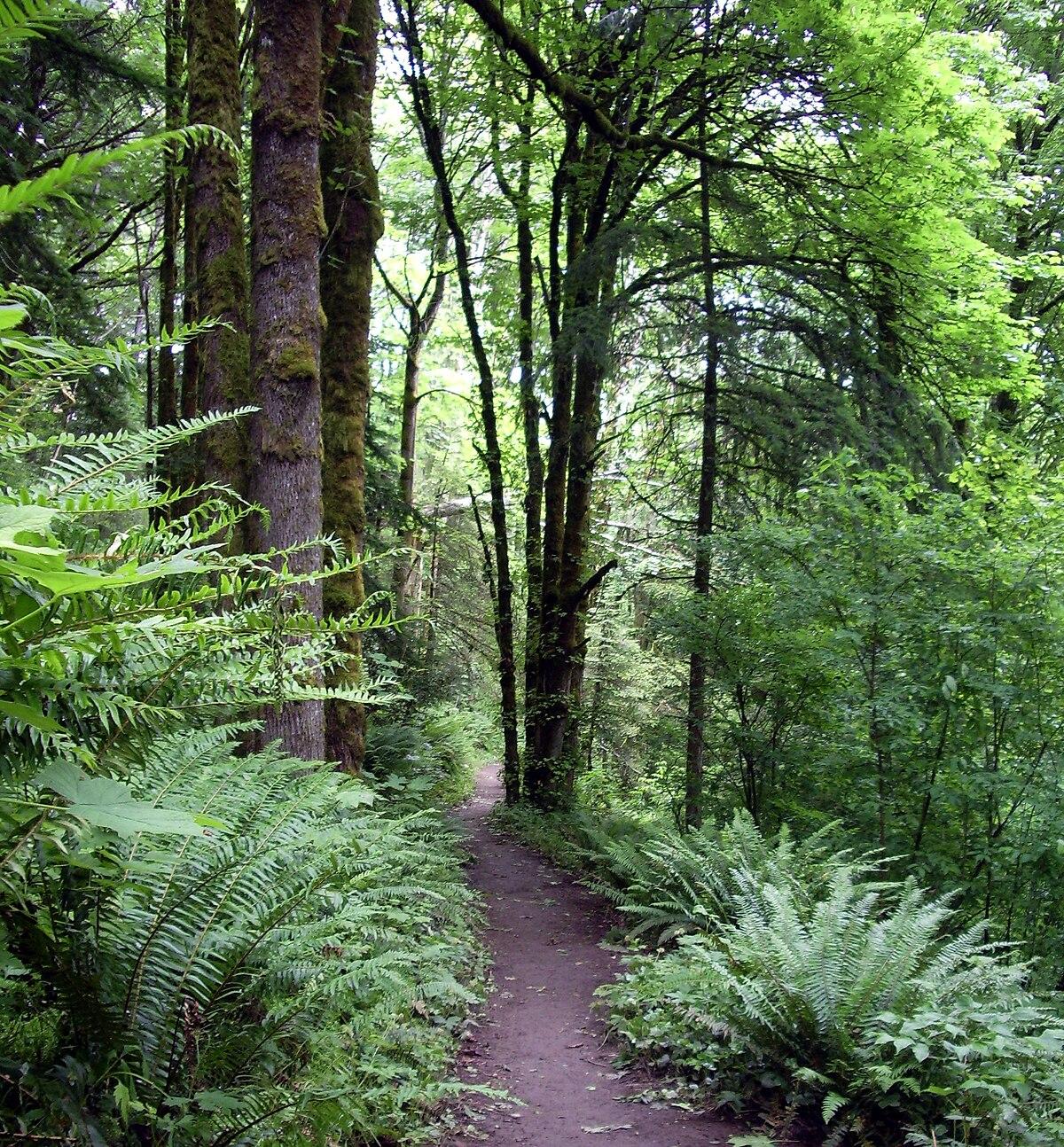 Multonomah Falls Wallpaper Forest Park Portland Oregon Wikipedia