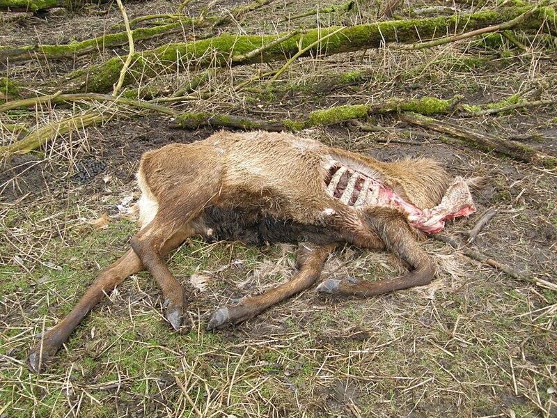 OP dood hert 2