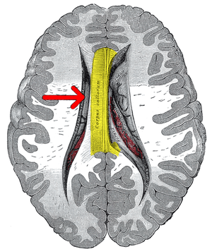 Gray's Anatomy 737 emphasizing corpus callosum.