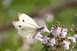 Sono proprio le ultime farfalle, ormai se non ...