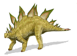 Stegosaurus stenops, a stegosaur from the Late...